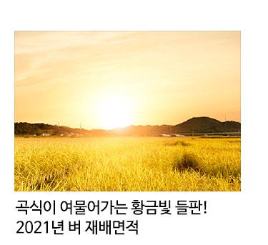 곡식이 여물어가는 황금빛 들판! 2021년 벼 재배면적